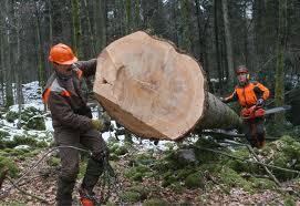 Aktualni javni razpisi in finančne spodbude za razvoj dejavnosti na podeželju (predelava lesa) – brezplačna delavnica, Preddvor 28.10.2013