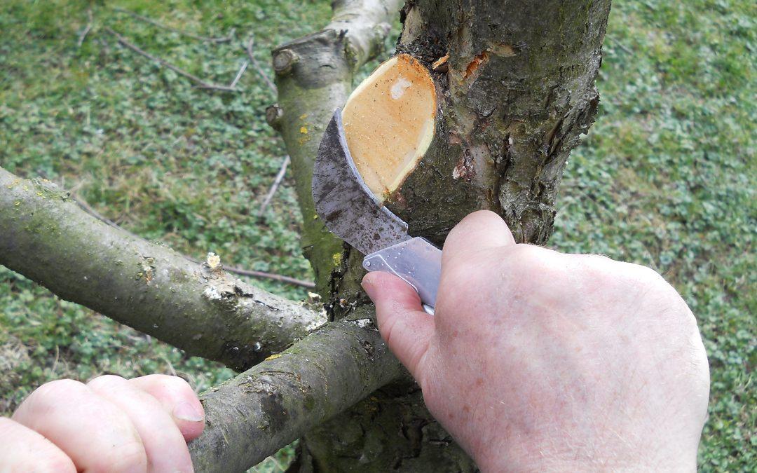 Obrezovanje sadnih dreves  (dvodnevni tečaj), Kranj, 14.2. in 15.2.2020