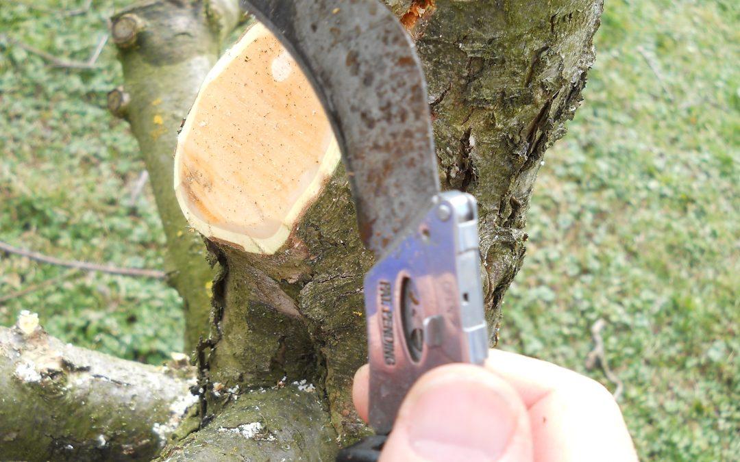 Obrezovanje sadnih dreves-dvodnevni tečaj (6.3. in 7.3.2020)