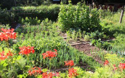 """Natečaj """"Naravi prijazen Gorenjski vrt"""" (maj-september 2020) – vabimo k sodelovanju"""