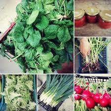 Praktično usposabljanje o naravnem vrtnarjenju na ekološki kmetiji, 8.6.2020