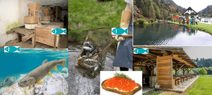 Urejanje lokacij za ribji sonaravni turizem in predstavljanje ribje kulturne dediščine (ZOOM), 16.11.2020