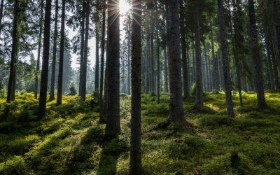 RESONANČNI LES–Prepoznavanje v gozdu, pravilen posek ter raznolike možnosti njegove uporabe, 3.9.2020 Bohinjska Bistrica