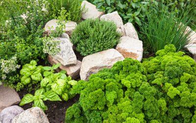Pomen zelišč in začimb v prehranski samooskrbi-22.7.2021